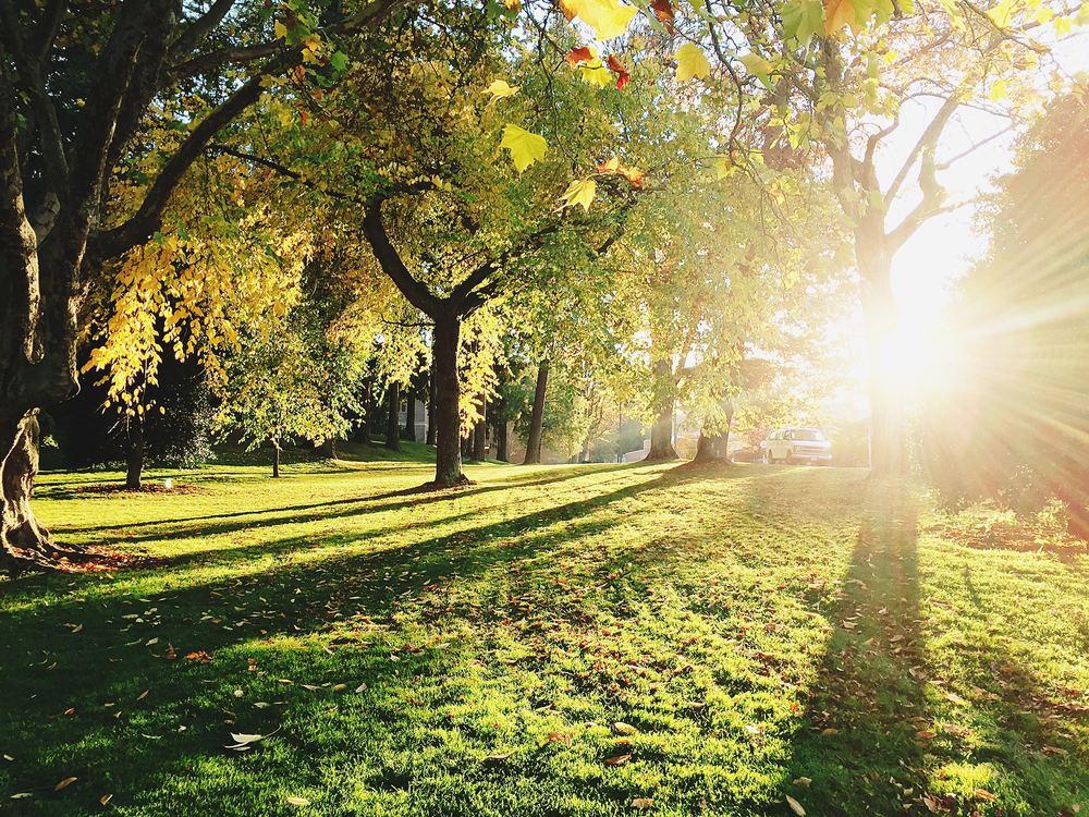 Gør havearbejdet nemmere – få hjælp til træpleje