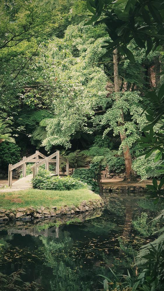 Skab liv i haven med et spejlbassin